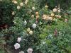 autumnsunset_jacquenetta_n7k_3486