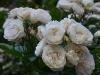bouquetparfait_n7k_4180