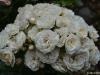 bouquetparfait_n7k_6965