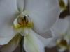 orchid_n7k_7364