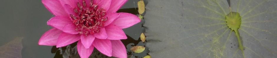 Sukhothai_P1140937