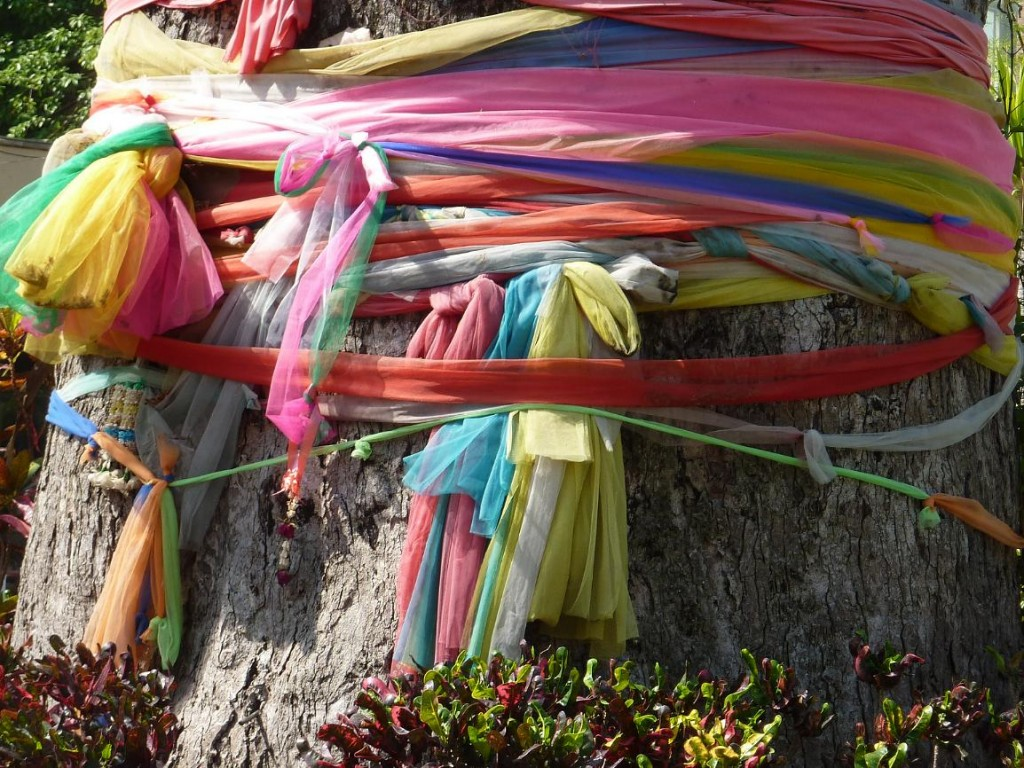 ribbons on ancient tree, Wat Chedi Luang Chiang Mai