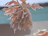 leaves_n7k_3216