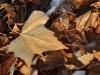 leaves_n7k_3351
