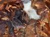 leaves_n7k_3354