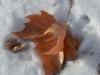 leaves_n7k_3361