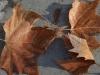 leaves_n7k_3362