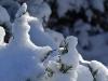 winter_n7k_2587