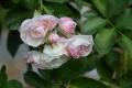 bouquetparfait_n7k_3173