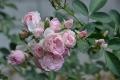 bouquetparfait_n7k_3585