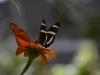 butterflies_n7k_3126